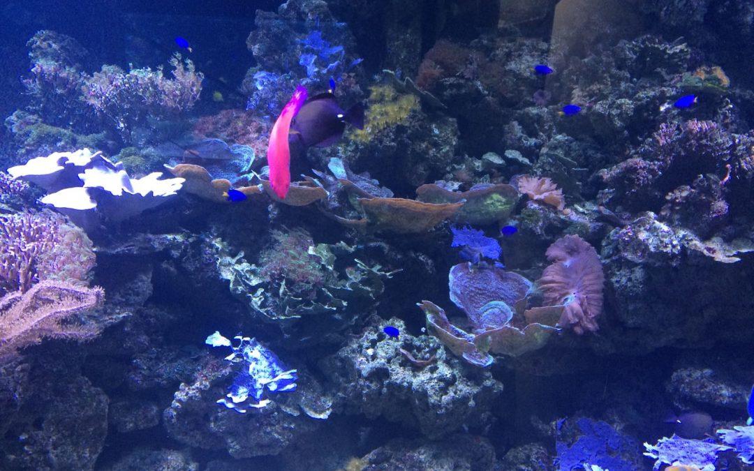 Aquarium de Murcia